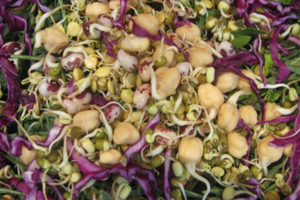 Detail of organic sprouts